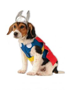 Costume Thor chien